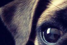 애견애묘디자인 / 강아지고양이모양디자인제품