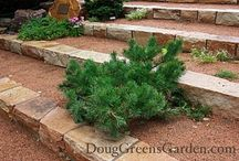 Landscaping ideas / by Doug Green