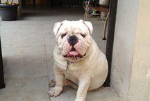 Rocco! / Mi perro