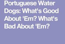 Vodný portugalský pes