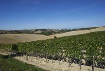 Paesaggi Senesi / Foto della parte meridionale della provincia di Siena.