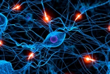 Neuroscience- How brain works..... / Anatomy-Physiology and all sciences related to how our brains works.... / by lucy