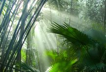 Rain Forest / Where I would like to explore one day, I love the Beautiful things that are in rainforests
