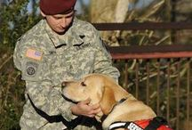 Dogs For Our Brave / Great organization providing service/companion dogs to injured  U.S. military who have suffered limb loss
