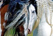 Horses / Horses. Their beauty. Their spirit. I want to be a horse! / by Deborah Ahrens