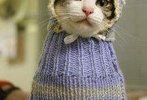 Kittyyyy!!!! <3 / by Mycah Ellis