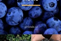 How to grow Blue Berries