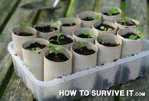 ültetési praktikák