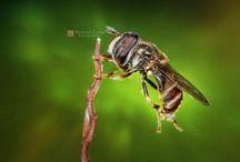 Macro Photoworks / #macro #photography