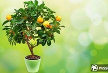 mk Как вырастить  дерево