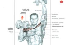 Muscle anatomy - Shoulders