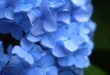 FLOWERS/PATTERN