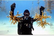 Good Aquarium Deeds