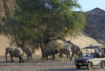 Conservation Journeys / Make a difference while you travel.