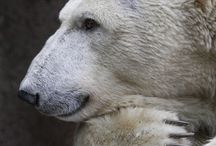 I Love All Bears!!! / Black, Brown and white all types of Bears!! / by Debbie Campbell