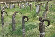 Cementerios y nichos