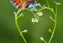 Butterflies & Bugs