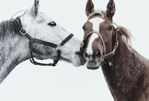 Country <3 / Horses, Cowboy, cowgirls