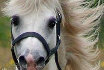 Miss Sophie's pony