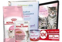 Je viens d'adopter un chaton / Retrouvez tout ce dont vous avez besoin, conseils, informations, produits pour accueillir au mieux votre chaton !