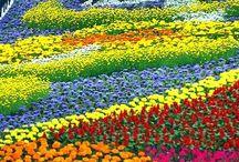 Vivid colour