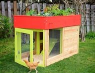 Fave Chicken Coup dream