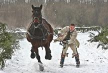 horses / inspo
