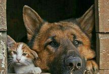 Interspecies buddying