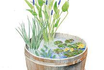 Water garden / by Micki Rau