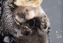 Oter/Otter