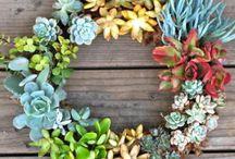 Gardening and houseplants / by Zipporah Scicchitano