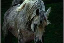 Horses / by Amanda Schwandt Hinkle