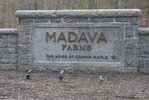Early Bird Connections at Madava Farms / Check out these photos from the Chamber's Early Bird Connections networking events.
