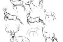 Олени/Deers