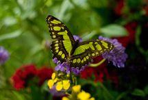 Butterflies, Moths, & Dragonflies / by Judy Newman