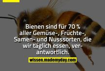 Bienen u. Schmetterlinge