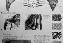 Schelpen / Voorstellingen van schelpen