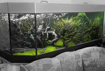 Meine Aquarien