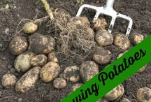Vegetable gardening tips