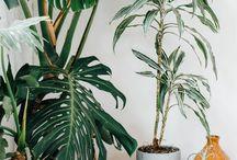 Plants in da house