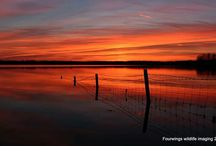 The Photography of Steve Houghton. / Steve Houghton is a local amateur photographer who's skill with a camera brings to life Rutland's stunning scenery and incredible wildlife.