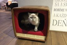Cat homes / Cat house from old tv