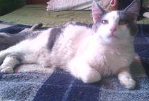 Gray y Alba / fotografías de mis bebes gatunos