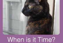 In-Home Pet Hospice / In-Home Pet Hospice & Pallative Care