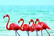*.* pink Flamengo*.*