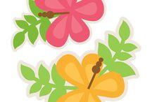 flowers / embellishments