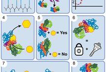 Teaching enzymes