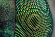 textures, textiles, colors