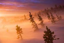 Colorado / by Susanna Haynie, Realtor in COS