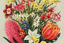 Blommor och Kex